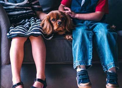 Les races de chiens idéales pour les enfants